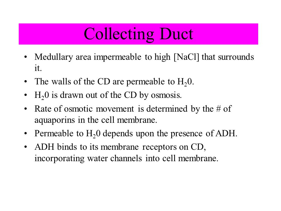 Collecting Duct Medullary area impermeable to high [NaCl] that surrounds it. The walls of the CD are permeable to H20.